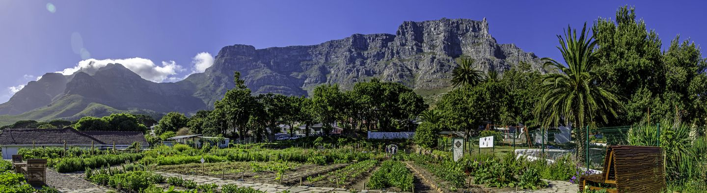 Urban Farming Cape Town